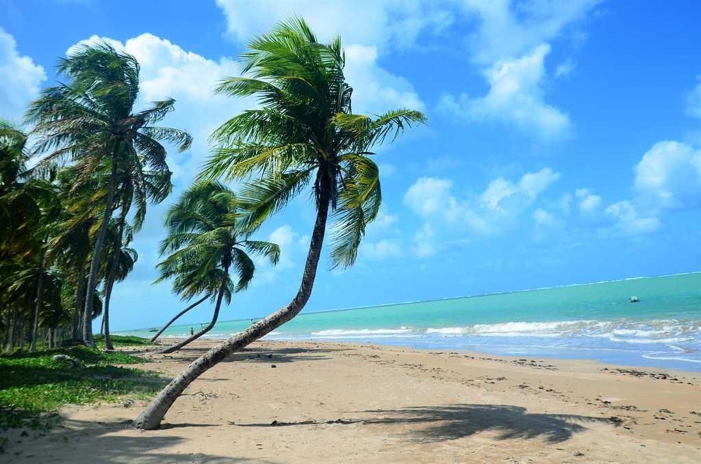 São Miguel dos Milagres é um município brasileiro do estado de Alagoas. Sua população estimada em 2004 era de 6.354 habitantes.